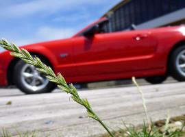 24 Std. Ford Mustang GT Cabrio selber fahren in Langenau, Raum Ulm