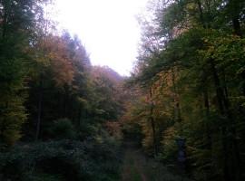 Waldbaden in Auen, Rheinland-Pfalz