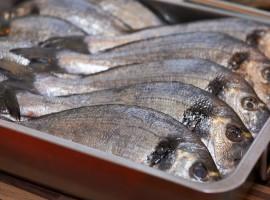 Fisch & Meeresfrüchte Kochkurs in Dresden, Sachsen