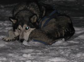 Husky Nachtfahrt für Zwei in Ödwang, Raum München in Bayern