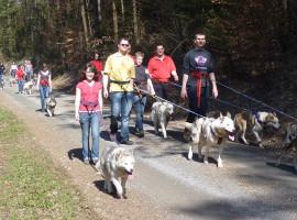 Huskywanderung in Brunnhartshausen, Raum Erfurt in Thüringen