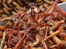 Insekten-Kochkurs in Schwetzingen, Raum Mannheim