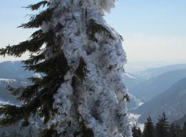 """Schneeschuh-Wanderung """"Privat-Stunde"""" in Menzenschwand"""