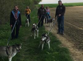 Husky Wanderung in Mödingen