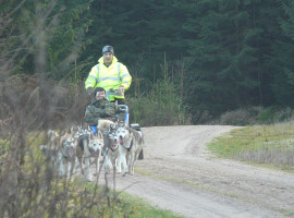 Husky Wochenende in Mödingen