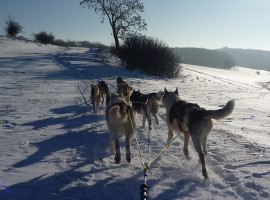 Schlittenhunde-Fahrt in Brunnhartshausen, Raum Erfurt