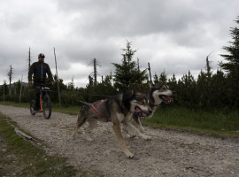3 Std. Dogscooter Tour in Silberborn