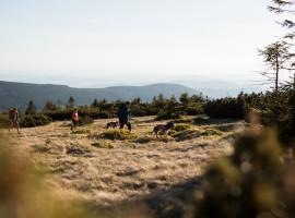 4 Std. Huskywanderung in Silberborn