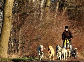 2,5 Std. Schlittenhunde-Fahrt in Stinstedt