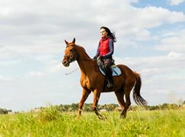 Pferde Kurs