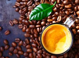 Kaffee-Seminar