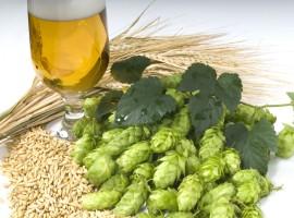 Bier Seminar