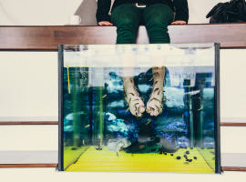 Fisch Pediküre / Maniküre